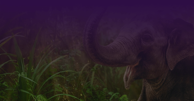 Cover บทความ ฝันเห็นช้าง
